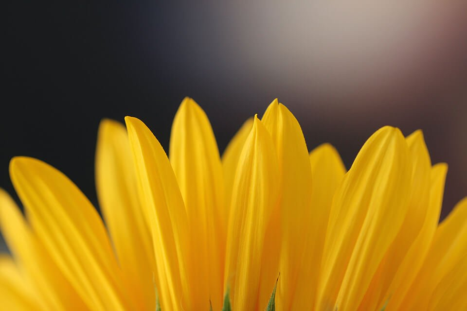 Top of yellow flower blossoming