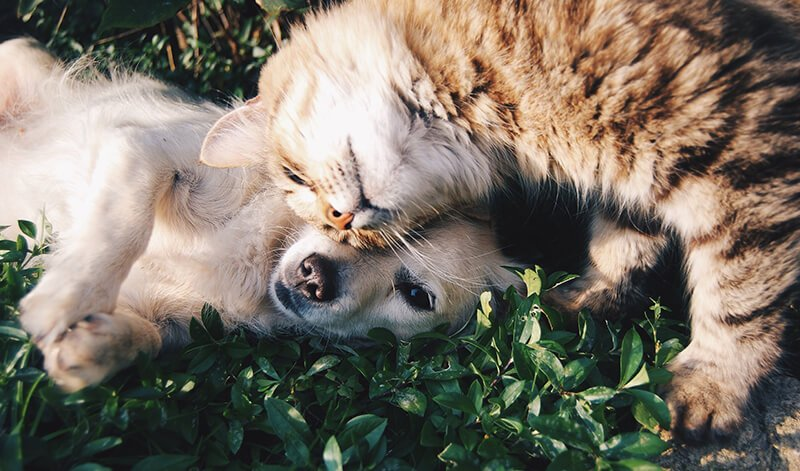 Cuddle up during panic attacks