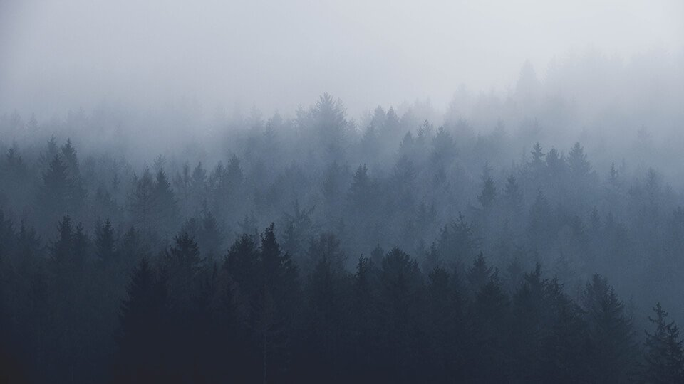 Foggy forest, metaphor for brain fog
