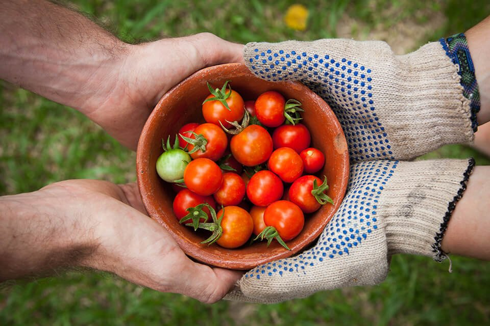 Hands offering a bowl of tomatoes to another pair of receiving hands