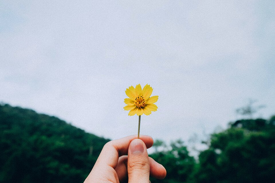 Person holding out yellow flower