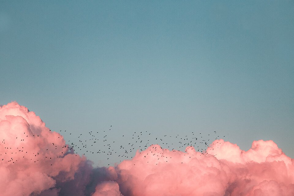 Pink clouds in the sky with birds flying past
