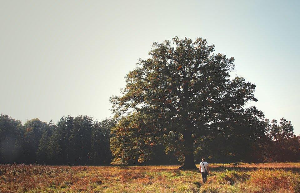 Tree standing peacefully in an open field