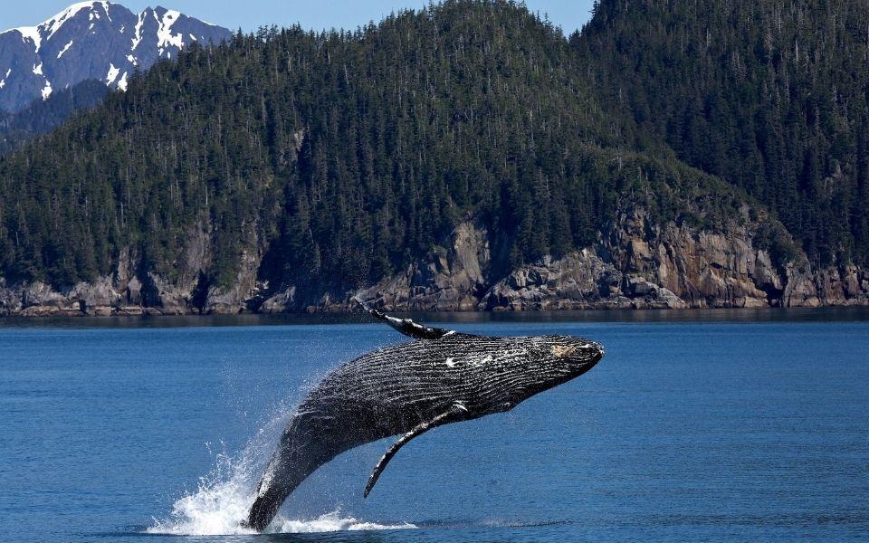 whale noises